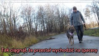 nauka chodzenia na smyczy szkolenie psa