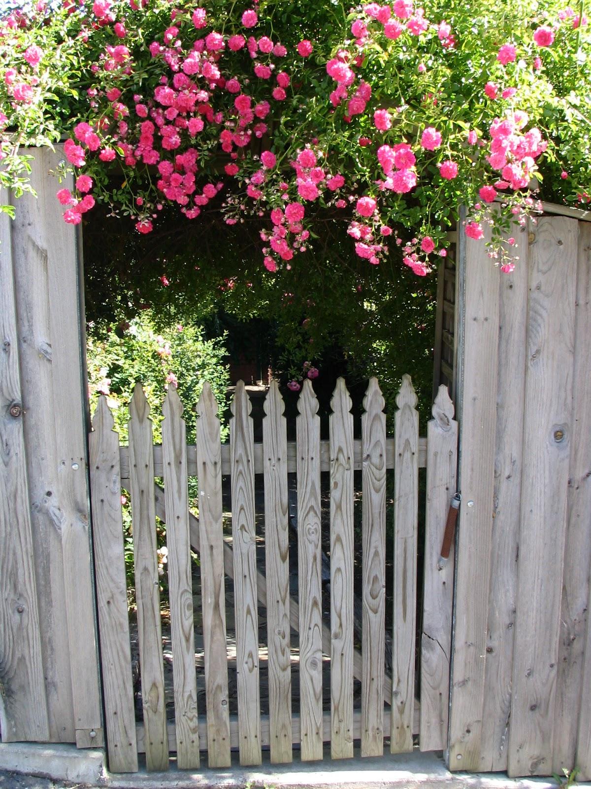 the consummate gardener florida gardening and more april 2016