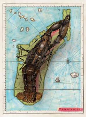 Illustration of marbled crayfish overlaying a map of Madagascar