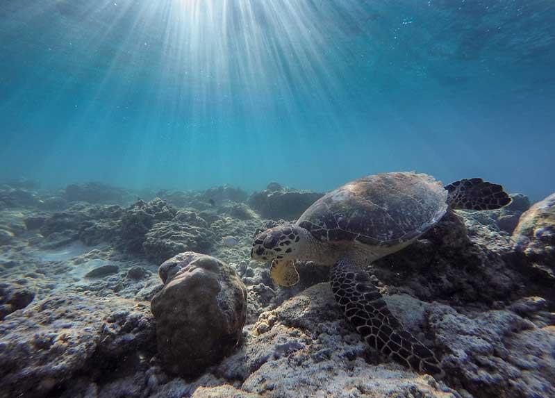 Snorkeling Kepulauan Gili Lombok