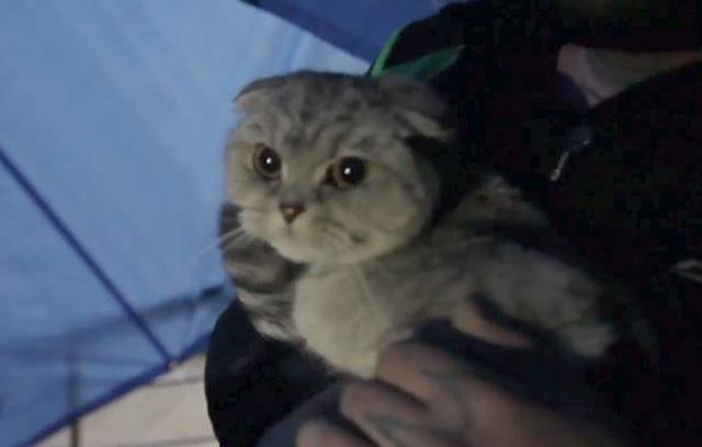 Кота замуровали под лестницей, но неравнодушные люди не дали погибнуть живой душе!