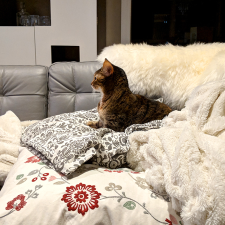 image of Sophie the Torbie Cat sittign on a pile of pillows on the sofa