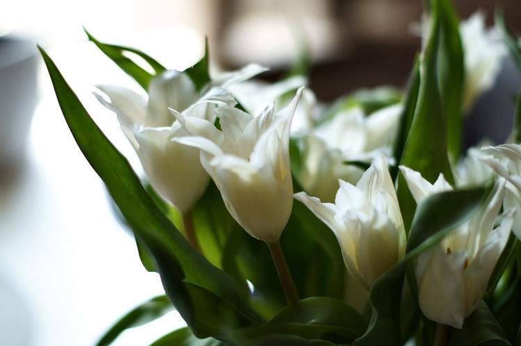 Spitze weiße Tulpen { by it's me! }