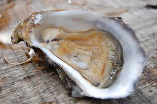 oyster peningkat gairah seks