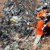 66 personas murieron en accidente de avión en Irán