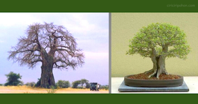 Bonsai Inspiration 1