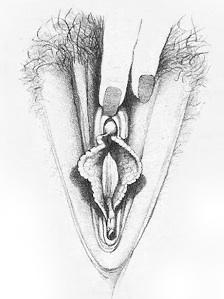 Жіночі статеві органи фото 3