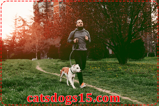 Your complete and comprehensive guide to canine obesity, fitness, exercise, and monitoring your dog's activity