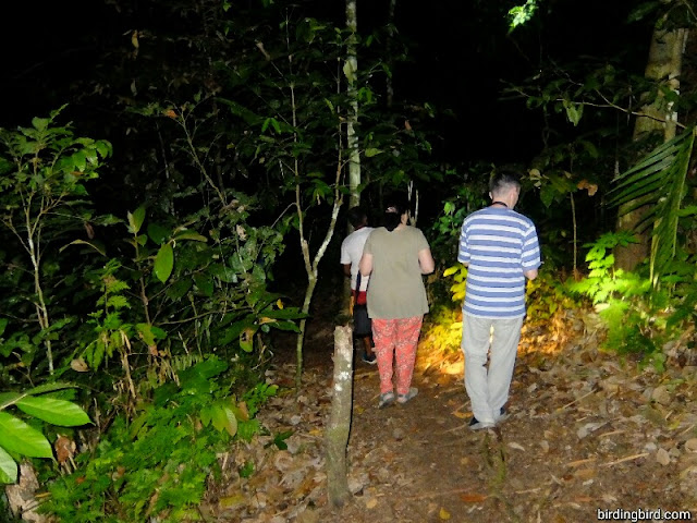 Night walk with Russian tourists in Manokwari of West Papua