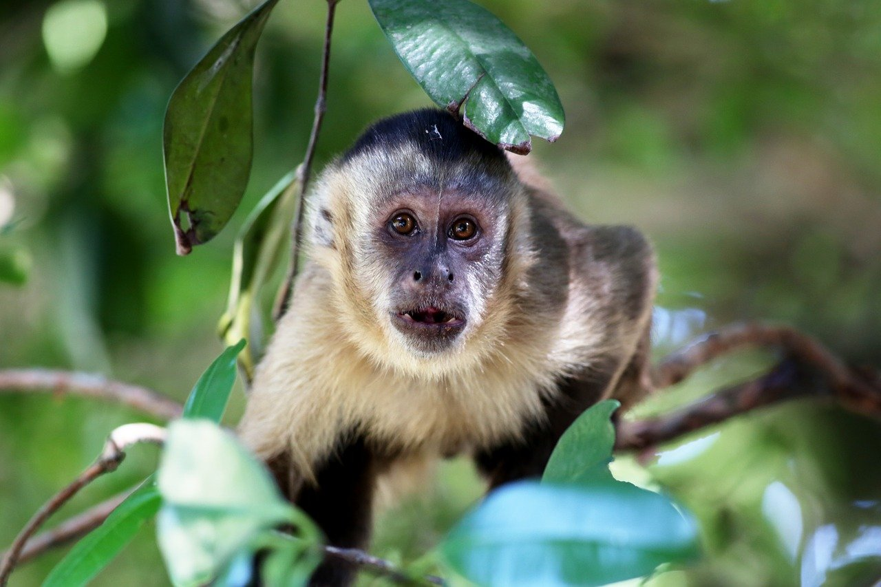 macaco prego da cor preta e branca em cima de uma arvore
