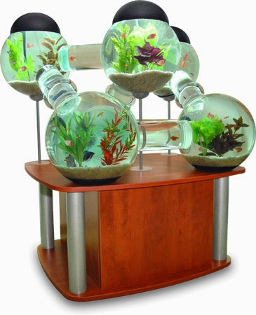 All about betta fish: Betta fish tank setup