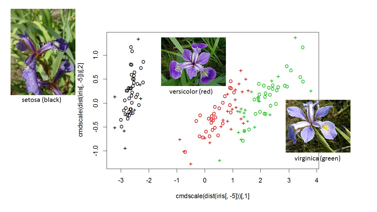 Using support vector machines as flower finders name that iris r using support vector machines as flower finders name that iris izmirmasajfo