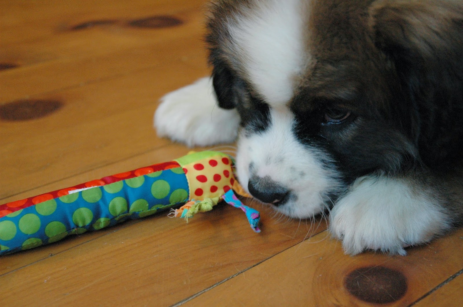 Image result for puppy play with toys