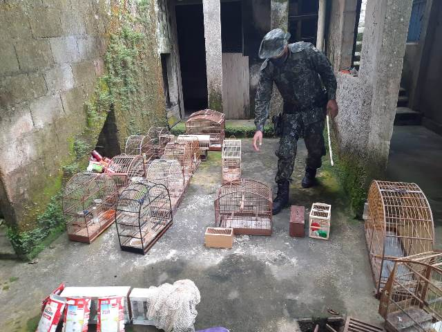 Policia Militar Ambiental descobriu um comércio ilegal de pássaros em Juquiá