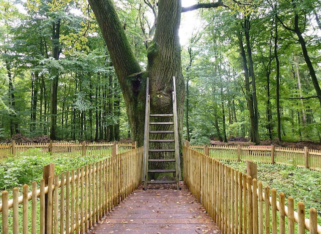 Bridegroom's Oak: The Tree With Its Own Postal Address