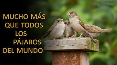 Evangelio según Mateo 10,24-33: Mucho más que todos los pájaros del mundo