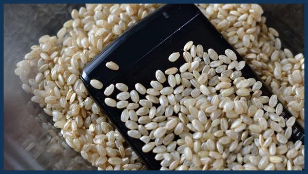 الأرز يساعد على تلف المياه الهاتف