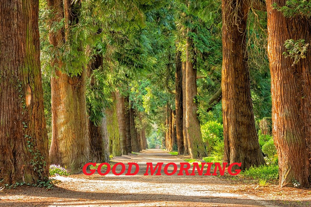 good morning wishes scenery images
