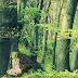 Verspéntek - Erdő vagyunk