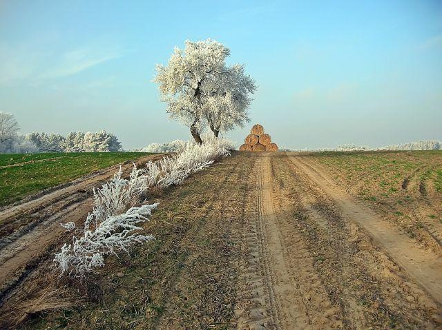 drzewa, zima, słoma, bale słomy, mróz