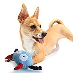 Hundespielzeug spielende Hunde
