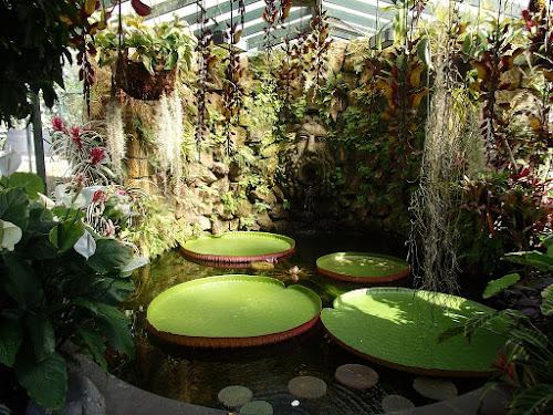 Invernadero en los Jardines La Mortella (Isla de Isquia)