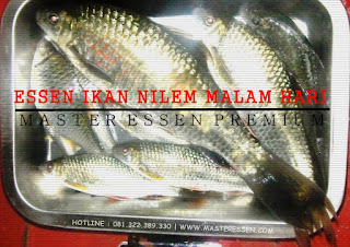 Essen Ikan Nilem Khusus Malam Hari