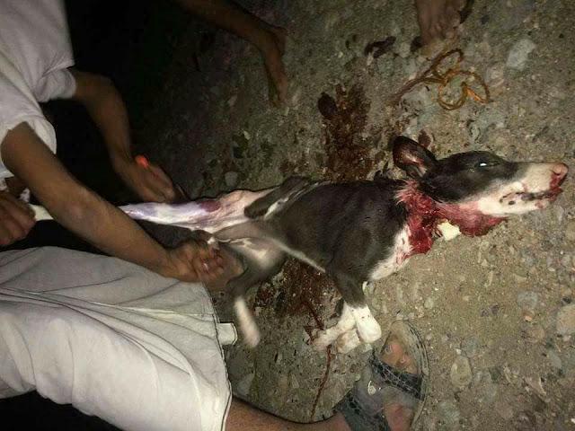 گوشت لیتے وقت بہت اختیاط کریں: گلی کے آوارہ کتوں کو کاٹ کر بکری کے گوشت کہہ کر مارکیٹوں میں بیچا جارہا ہے: دیکھیئے