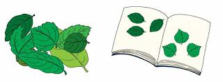 macam - macam daun