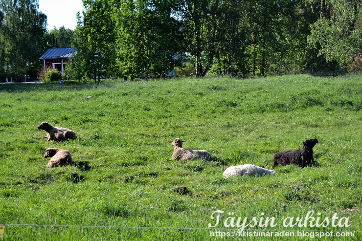 Vaasa lampaat kesätöissä
