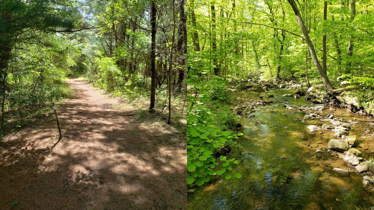 Roaring Rock Park Hiking Path Brass Castle Creek Washington Township Warren County NJ