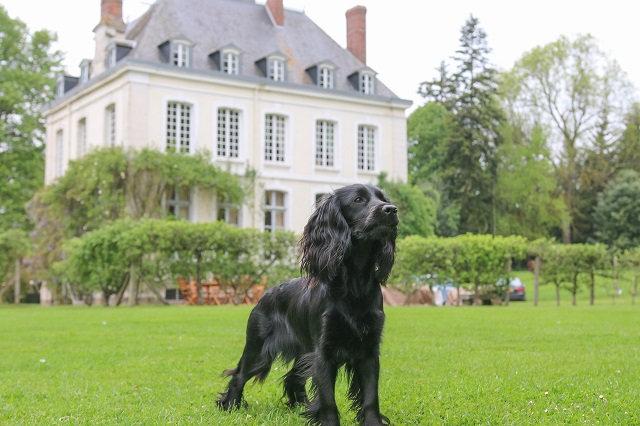 Dog Holiday in France