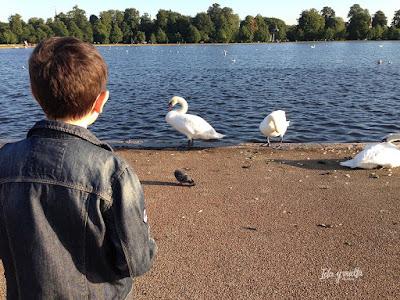 Round Pond, Kensington Gardens.