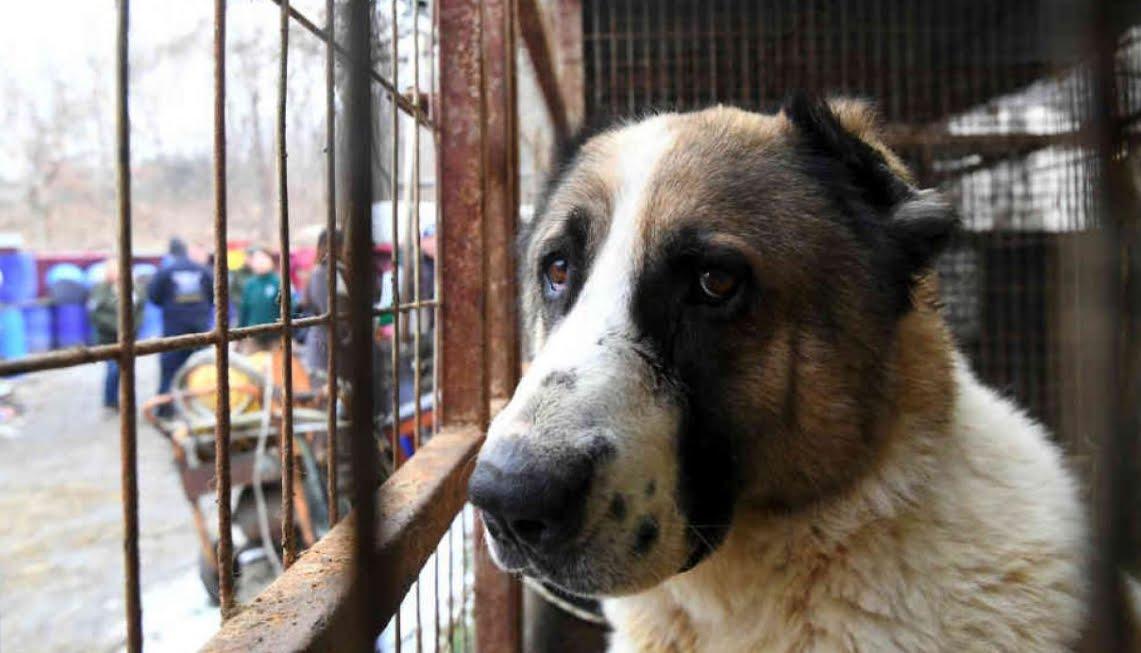 Corea del Sud: adesso è illegale uccidere i cani per mangiare la loro carne.