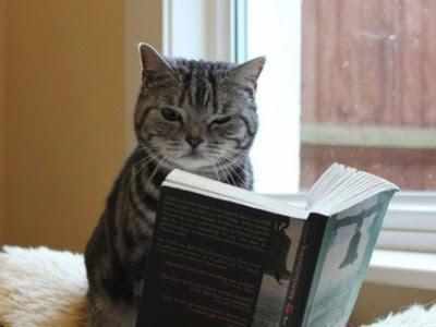 Penulis Tentang kucing