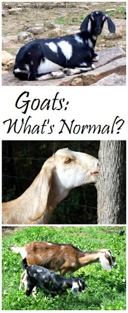 Goats can be rather peculiar, so what's normal and what isn't?