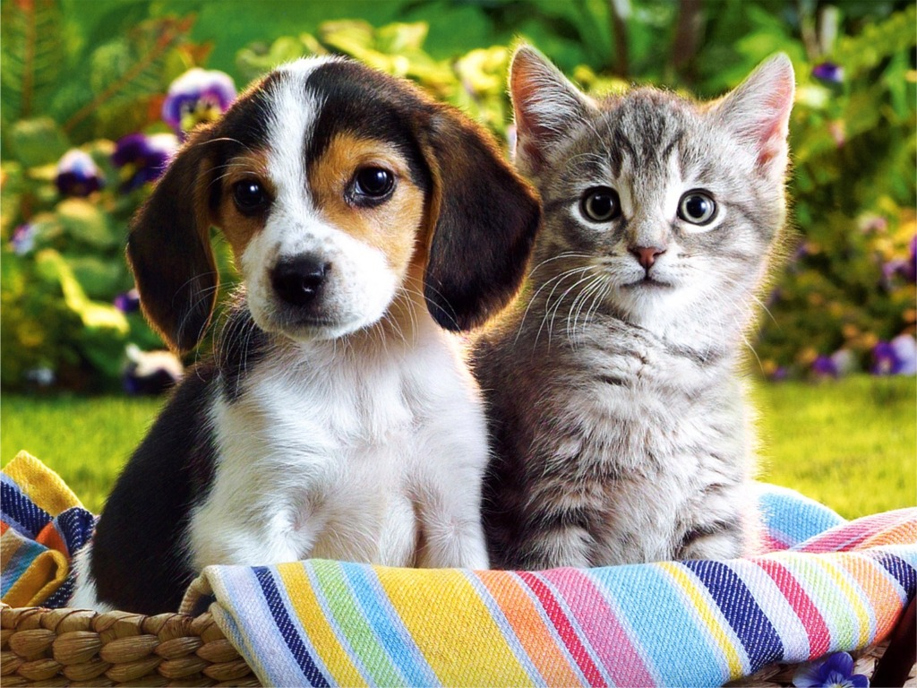 Cute Puppies And Kittens Wallpaper: Beautiful Flower Wallpapers For You: Kitten Puppy Wallpaper