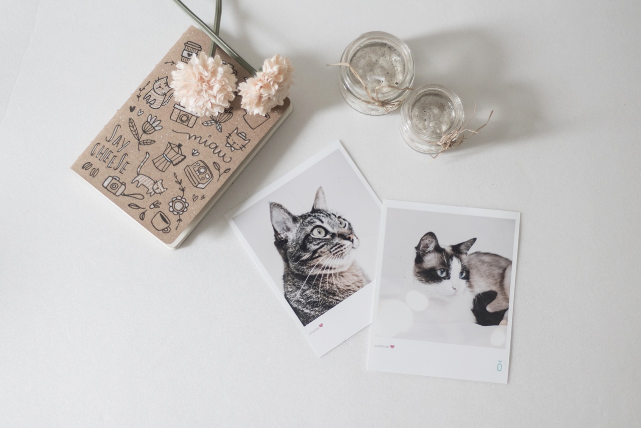 sobre amores (e felinos) / blog coffee & flowers