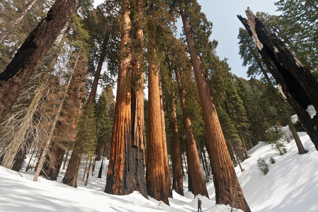 sequoia national park history