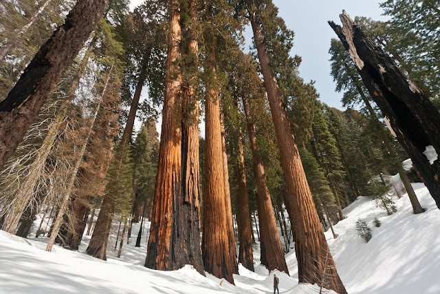 7 Sequoia National Park Facts That Are Impressive