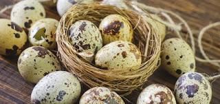 Trứng cút, dinh dưỡng phát triển trí não của trẻ.