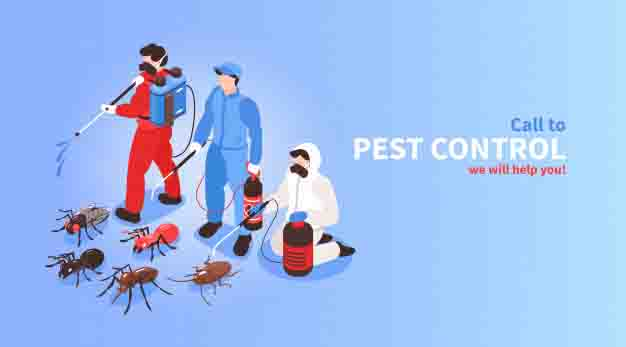 A Pest Control London Company You Can Trust