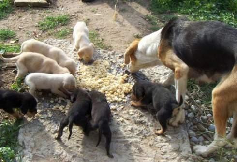 Τέλος η Ζωοφιλια στην Ελλάδα – Θα απαγορεύεται η περισυλλογή και η φροντίδα αδέσποτων ζώων