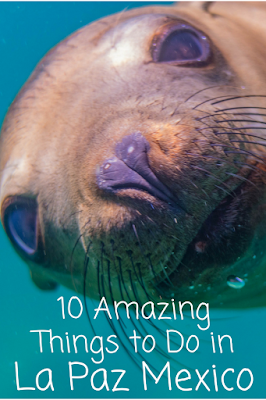 Travel the World: Amazing things to do in La Paz Mexico including swimming with whale sharks, snorkeling with sea lions, and exploring La Paz and nearby Todos Santos and El Triunfo.