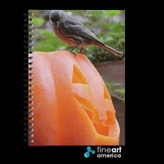 Get My Notebooks!