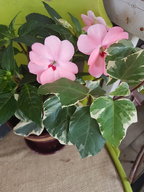 plant delivery The Camellia