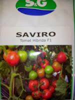 Benih, Saviro,tomat, tahan virus,kuning, keriting, unggul, dataran rendah, tinggi, petani, SG Seed, Saviro murah
