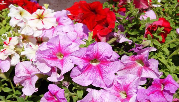 Plantas que resisten el sol