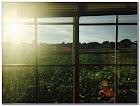 Best Home WINDOW TINT