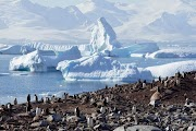 10 Interesting Facts About Antarctica That You Never Know Before